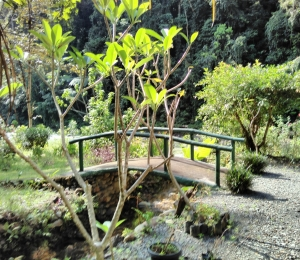 Das Bild zeigt eine kleine Brücke über einen Bach umgeben von tropischer Landschaft