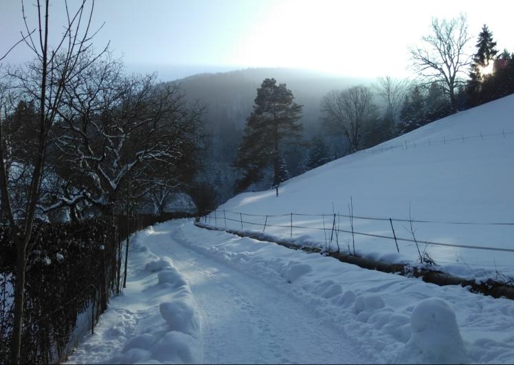 Das Bild zeigt einen schneebedeckten Weg in einer Winterlandschaft